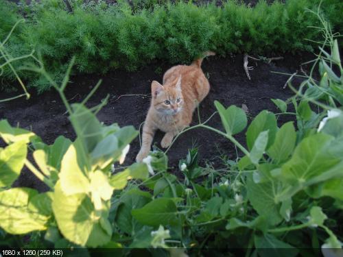 """Фотоконкурс """"Кошки на картошке"""" A328e500c7dc608f55e5f68a69fdb881"""