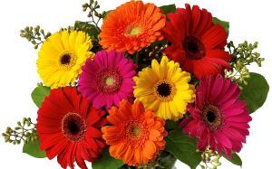 Поздравляем с Днем Рождения Светлану (Lanohka) 6db3d69eeda703b00147a721fc18267f