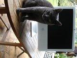 Les macs, c'est joli, mais ca marche comment? Th_DSC05820