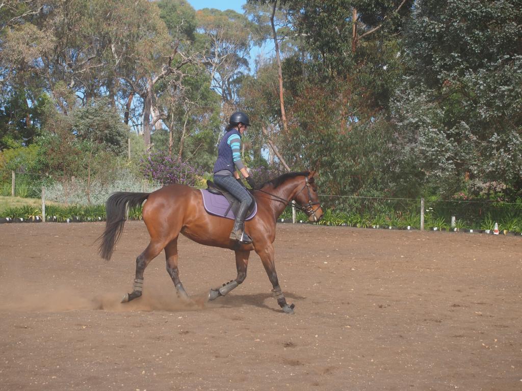 Eventing TB mare P1016158
