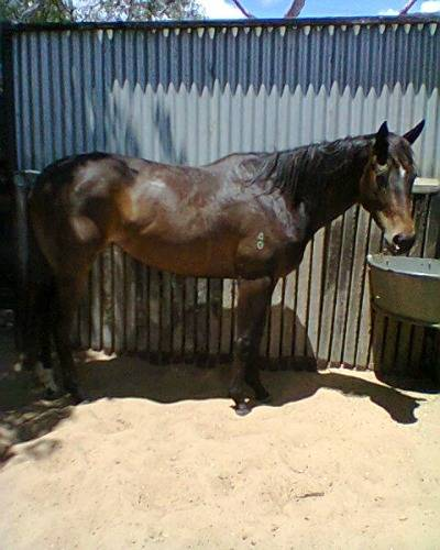 Very attractive TB filly  Photo0005_zps5c4b8bf5