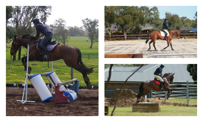 Eventing TB Mare PicMonkeyCollage_zps8c894fa5