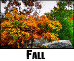 Saisons et Périodes Fall2