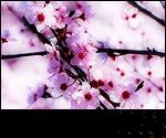 Saisons et Périodes Spring2