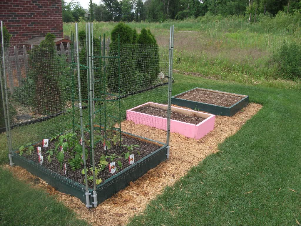 Finally Planted my SFG DSCF2882