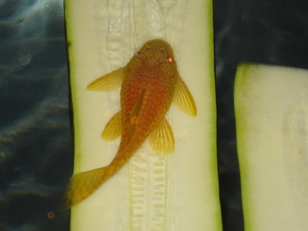 Albino BN Pics DSC05804