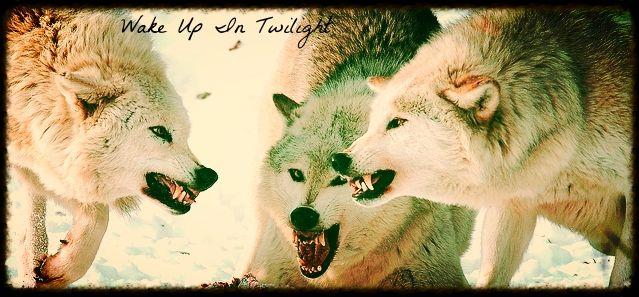 Wake Up In Twilight 7887e86e-3f00-4ebd-a9c7-ff255afcfaa0_zps79cab824