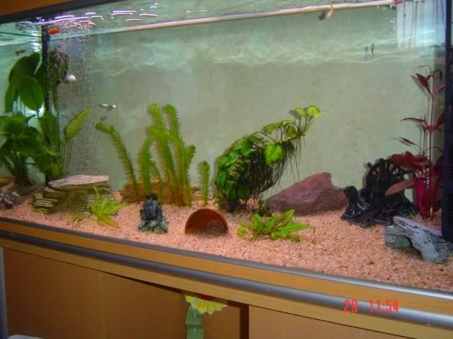 L'aquarium 200 L de Thierry 34 Aqua