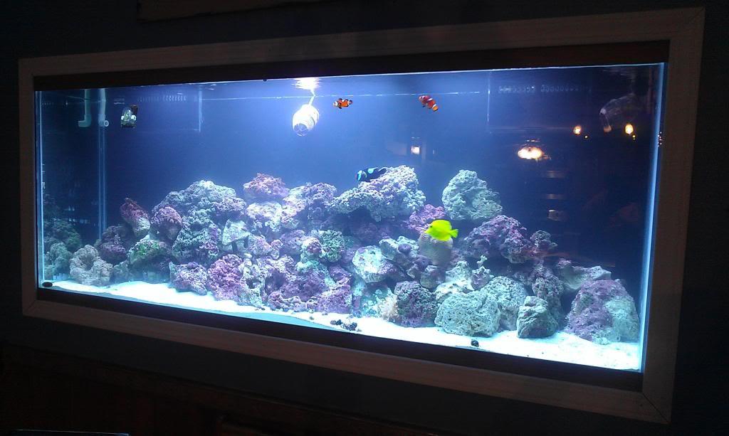 My Latest Project Aquarium4