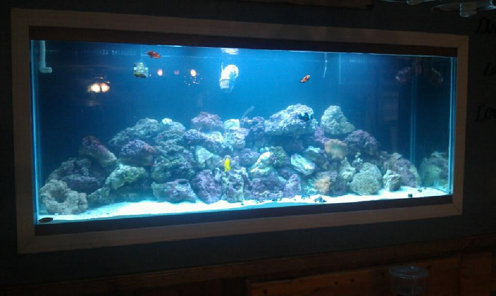 My Latest Project Aquarium8