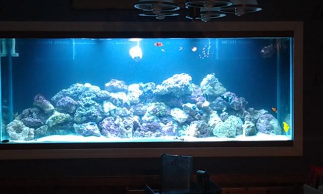 My Latest Project Aquarium9