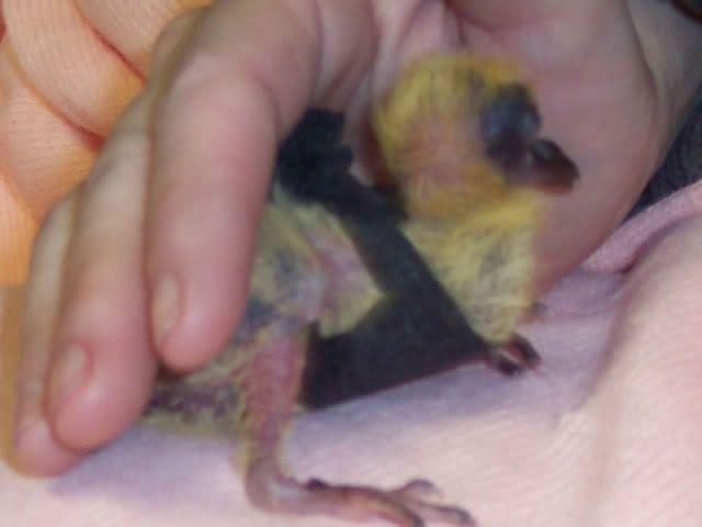 Baby Ferals Bra1