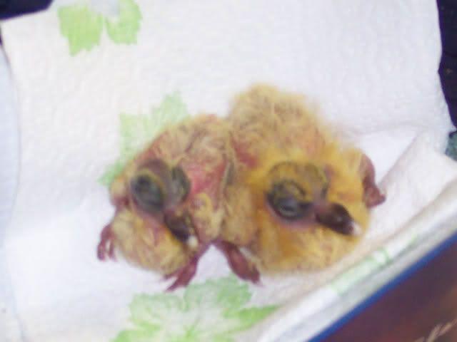 Baby Ferals Siblings1