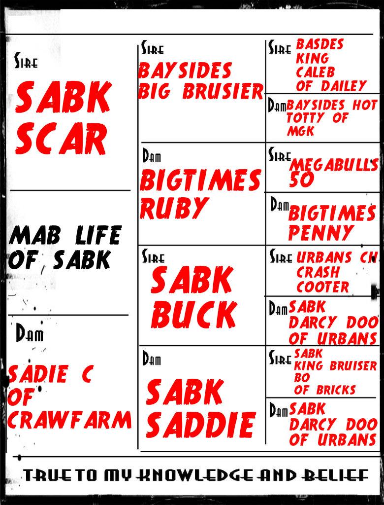 MAB'S LIFE OF SABK  Blank3Copy-1_zps76b82d8c