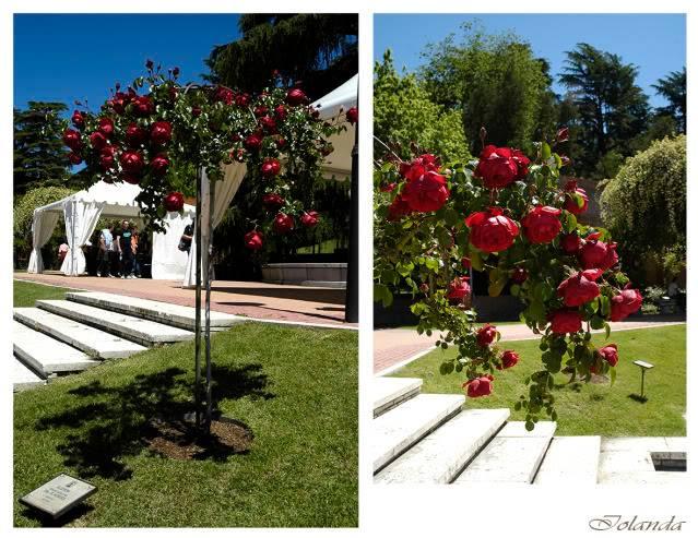 Las rosas de Ca´Trana - Página 4 _DSC6036comcopia