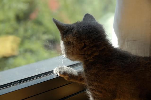 La gata mas fea :) DSC_3249recrec