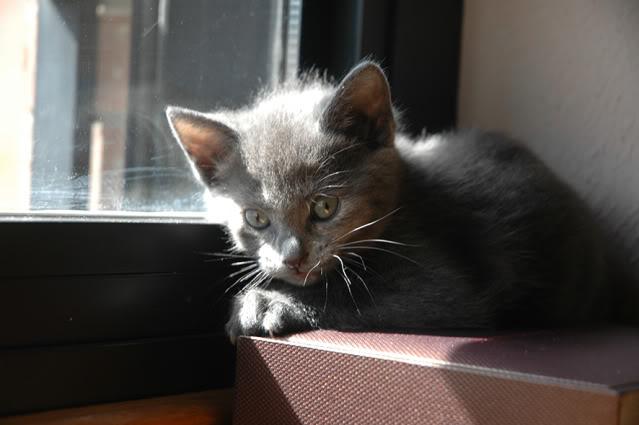La gata mas fea :) DSC_3268recrec