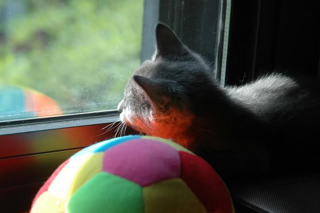 La gata mas fea :) DSC_3271recrec