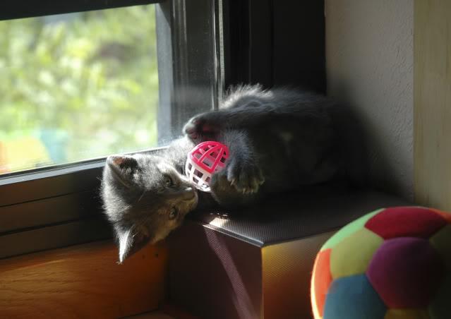 La gata mas fea :) DSC_328002recrec