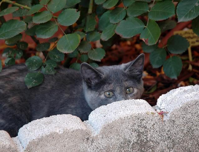 La gata mas fea :) DSC_3526rec