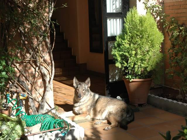 La gata mas fea :) DSC_3533rec