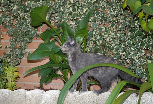 La gata mas fea :) DSC_3539rec