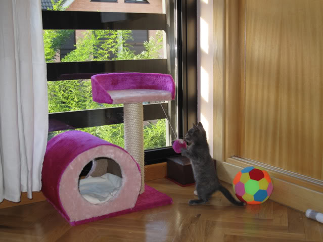 La gata mas fea :) IMG_3532recrec