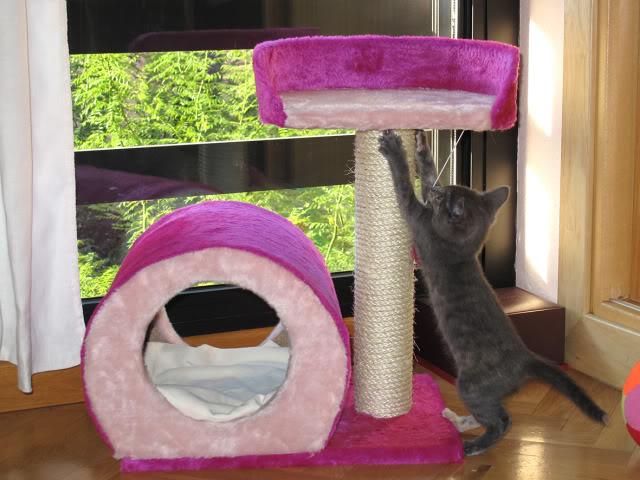La gata mas fea :) IMG_3538recrec