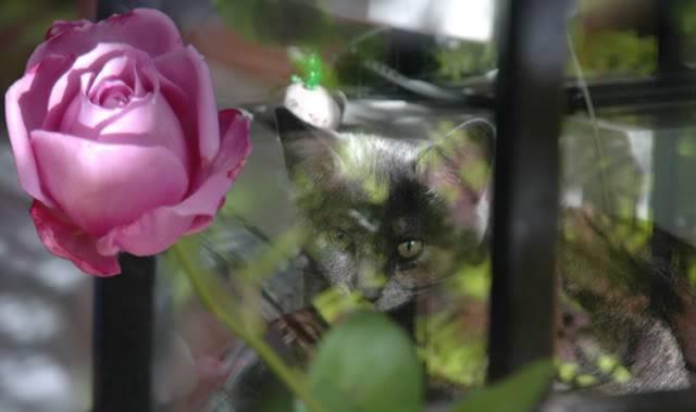 La gata mas fea :) Gataycharlesdegaulle