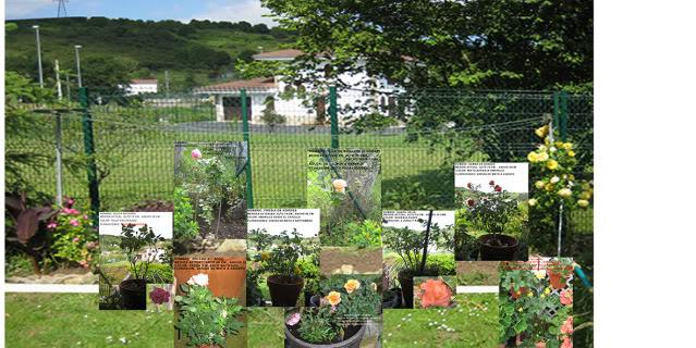 Un sueño.........Mil rosas en mi Jardin - Página 2 Opcionesrosaledatrana02