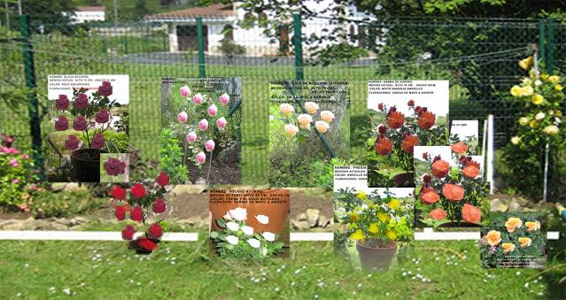 Un sueño.........Mil rosas en mi Jardin - Página 3 Opcionesrosaledatranadefinitivacopi