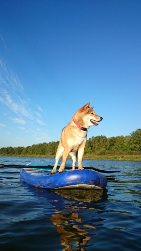 Собаки и спорт E400cee5ed1a9207438fdbf980ad3af0