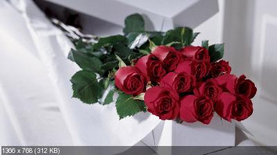 Поздравляем с Днем Рождения Евгению ( БоГиНя_ЕвГеНиЯ) F1153bc1515257a426bcafddcbce1337
