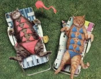 Stop à l'invasion des chats ! - Page 2 Swimsuit_cats