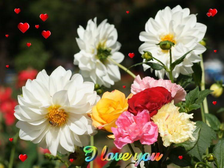 நான் ரசித்த மலர்கள் சில... - Page 10 Beautiful_tropical-flowers-dsc09879