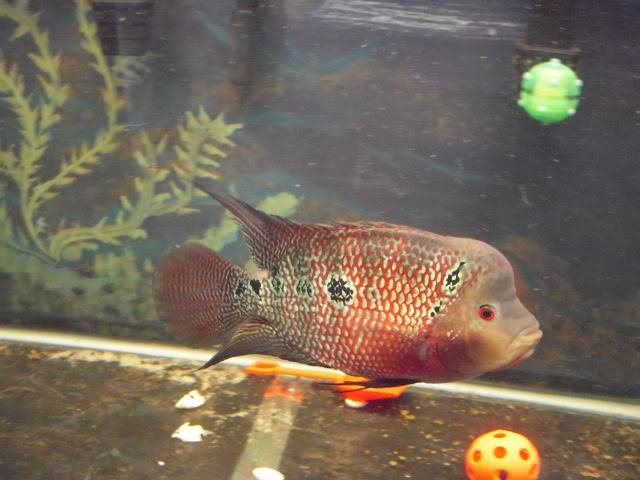 Some of my fish DSCN5653