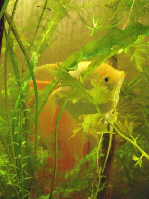 Some of my fish DSCN5723