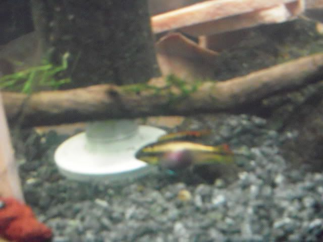 Some of my fish DSCN5726