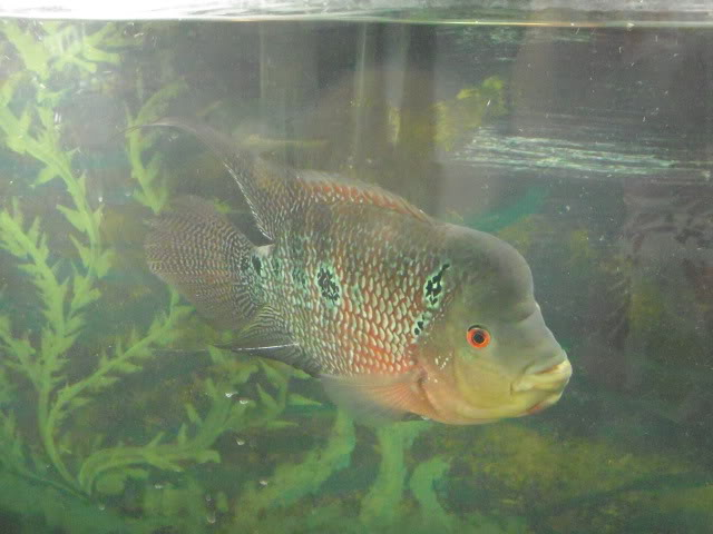 Some of my fish DSCN5727