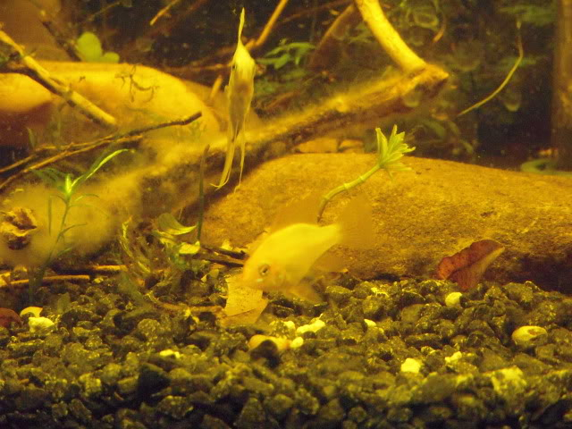 Some of my fish DSCN5729