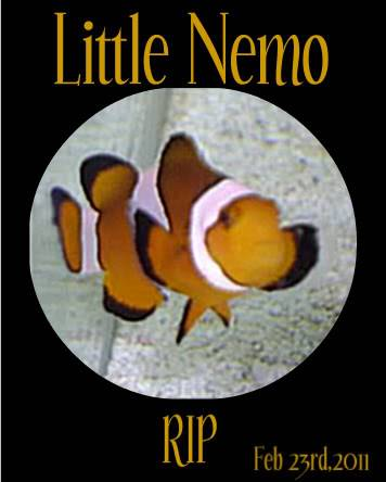 Nemo jumped ship :( LittleNemo-1