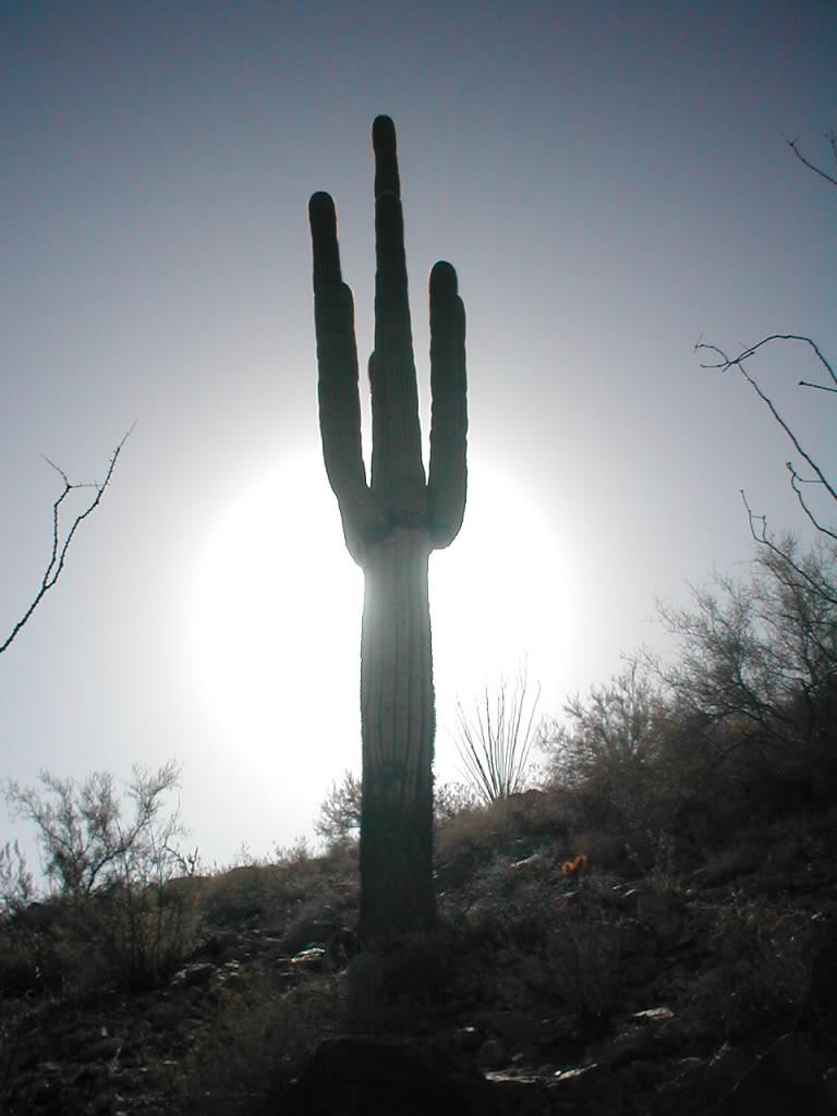 JOC CU IMAGINI Cactus-sun