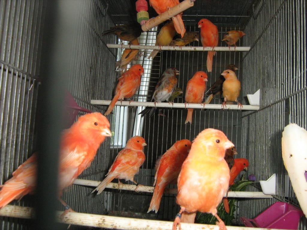 Vladine ptice - Page 11 IMG_3203