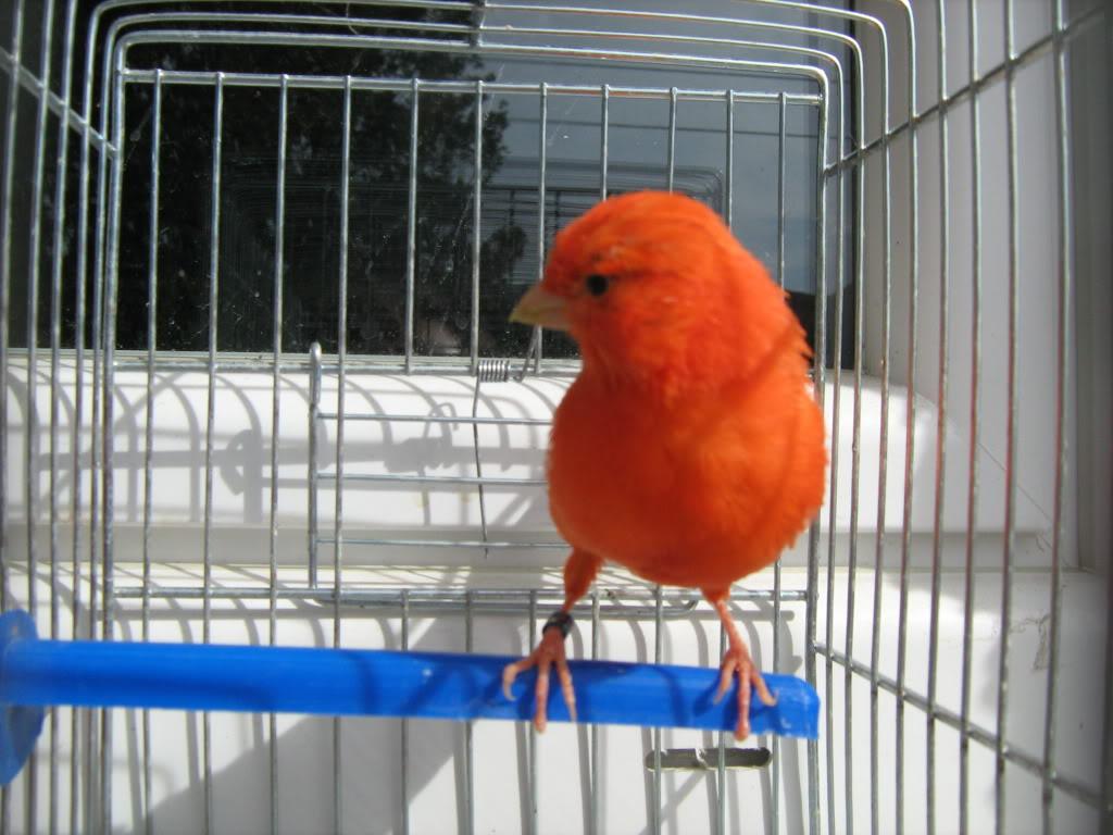 Vladine ptice - Page 12 IMG_3325