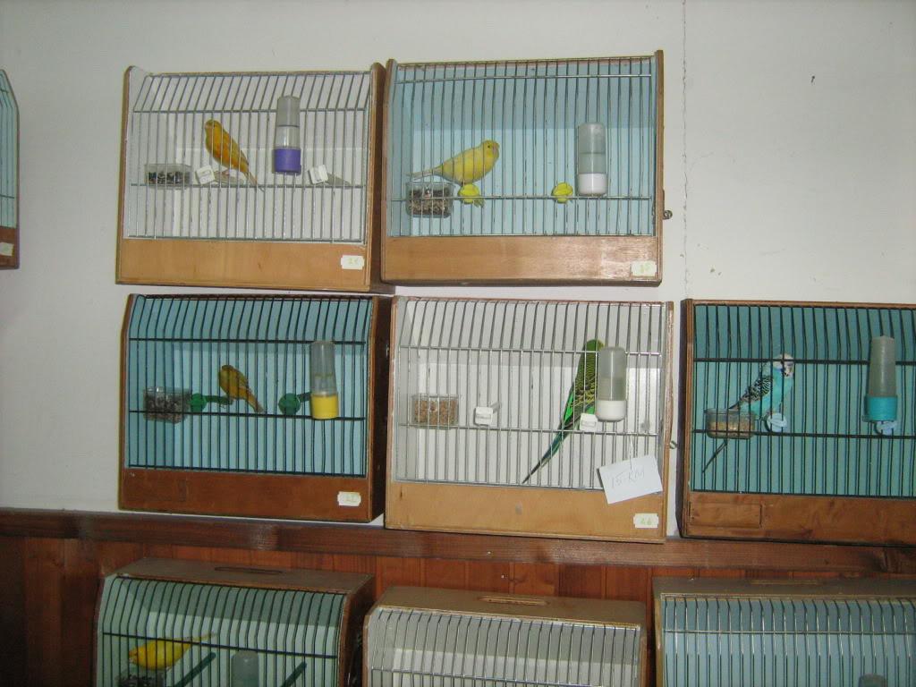 Vladine ptice - Page 12 IMG_3565