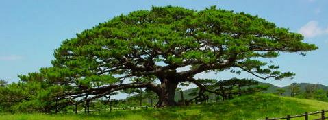 [Técnica] Conexión y comunicación con árboles.  Sfdasd