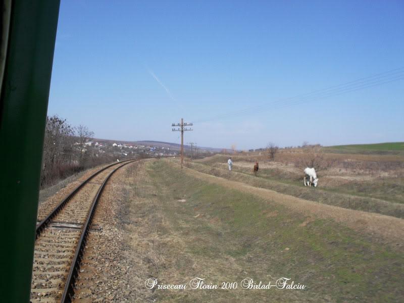 603 : Zorleni - Falciu Nord - Prut SDC10079copy