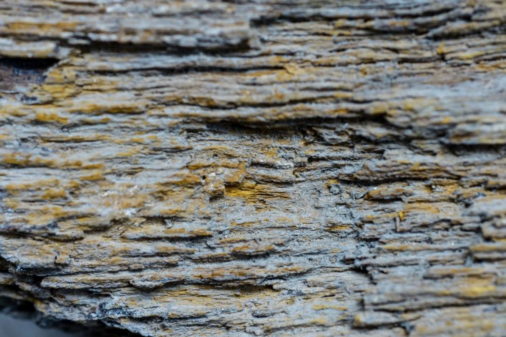 Structures et bois fossiles Cl-1