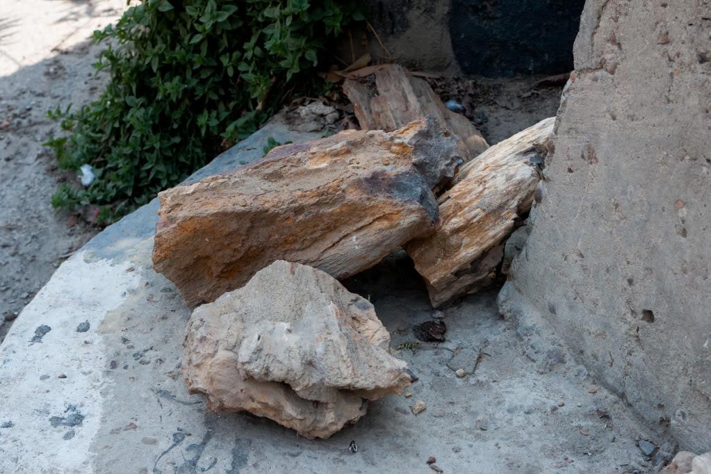 Structures et bois fossiles Cl-2-2