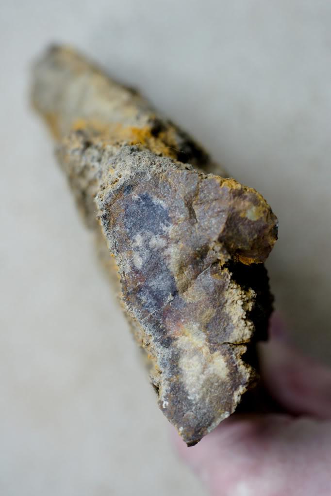 Structures et bois fossiles Cl-3-1